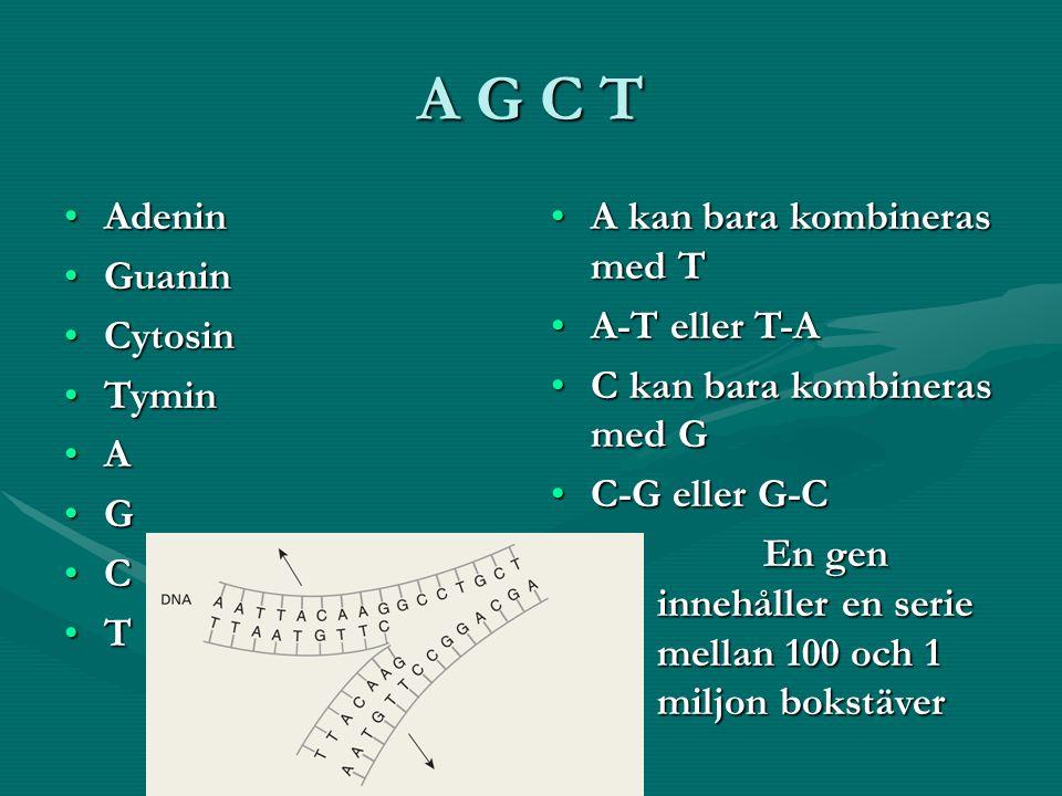 A G C T AdeninAdenin GuaninGuanin CytosinCytosin TyminTymin A G C T A kan bara kombineras med T A-T eller T-A C kan bara kombineras med G C-G eller G-C En gen innehåller en serie mellan 100 och 1 miljon bokstäver