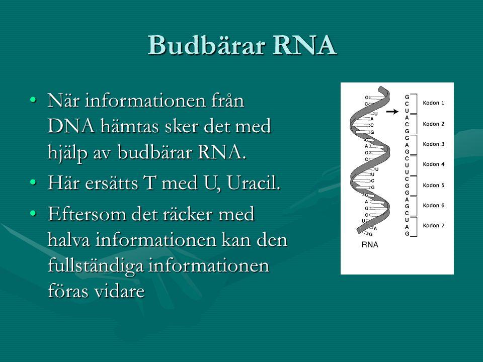 Budbärar RNA När informationen från DNA hämtas sker det med hjälp av budbärar RNA.När informationen från DNA hämtas sker det med hjälp av budbärar RNA.