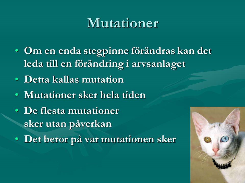 Mutationer Om en enda stegpinne förändras kan det leda till en förändring i arvsanlagetOm en enda stegpinne förändras kan det leda till en förändring i arvsanlaget Detta kallas mutationDetta kallas mutation Mutationer sker hela tidenMutationer sker hela tiden De flesta mutationer sker utan påverkanDe flesta mutationer sker utan påverkan Det beror på var mutationen skerDet beror på var mutationen sker
