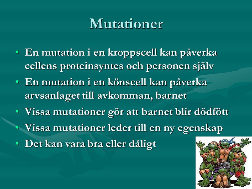 Mutationer En mutation i en kroppscell kan påverka cellens proteinsyntes och personen självEn mutation i en kroppscell kan påverka cellens proteinsyntes och personen själv En mutation i en könscell kan påverka arvsanlaget till avkomman, barnetEn mutation i en könscell kan påverka arvsanlaget till avkomman, barnet Vissa mutationer gör att barnet blir dödföttVissa mutationer gör att barnet blir dödfött Vissa mutationer leder till en ny egenskapVissa mutationer leder till en ny egenskap Det kan vara bra eller dåligtDet kan vara bra eller dåligt