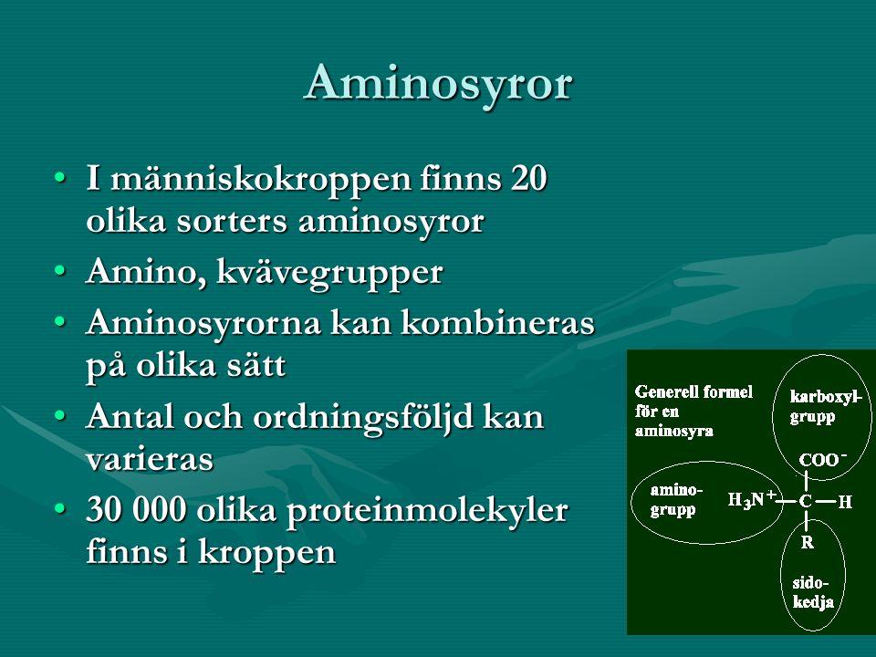 Aminosyror I människokroppen finns 20 olika sorters aminosyrorI människokroppen finns 20 olika sorters aminosyror Amino, kvävegrupperAmino, kvävegrupper Aminosyrorna kan kombineras på olika sättAminosyrorna kan kombineras på olika sätt Antal och ordningsföljd kan varierasAntal och ordningsföljd kan varieras 30 000 olika proteinmolekyler finns i kroppen30 000 olika proteinmolekyler finns i kroppen