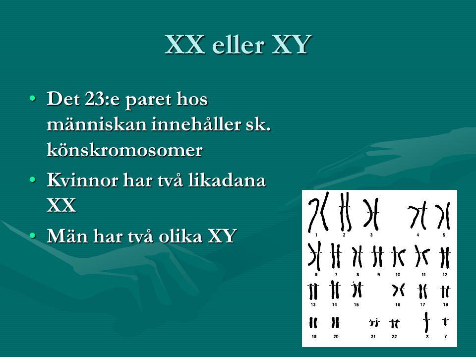 XX eller XY Det 23:e paret hos människan innehåller sk.