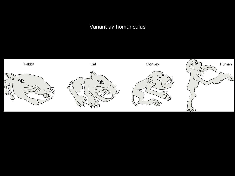 Variant av homunculus
