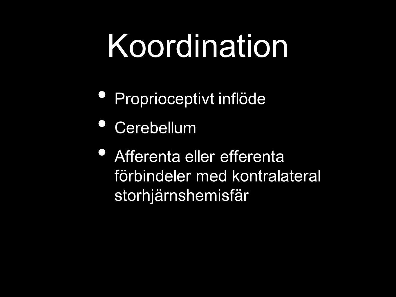 Koordination Proprioceptivt inflöde Cerebellum Afferenta eller efferenta förbindeler med kontralateral storhjärnshemisfär