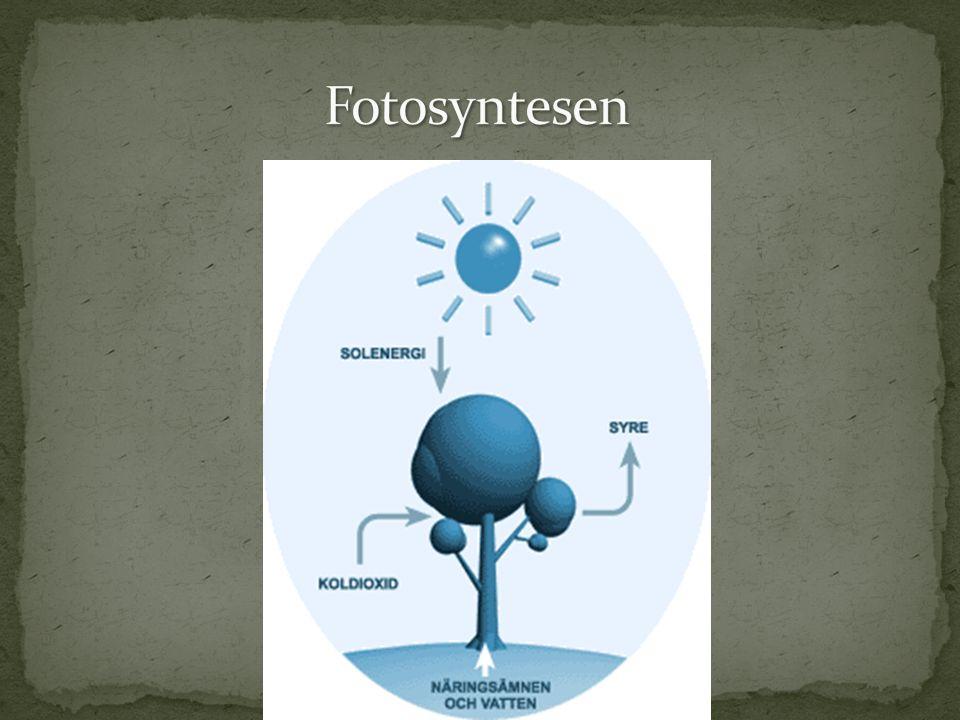 Består av kol-, syre- och väteatomer Finns som socker, stärkelse och cellulosa Kommer från växtriket Är vår viktigaste energikälla