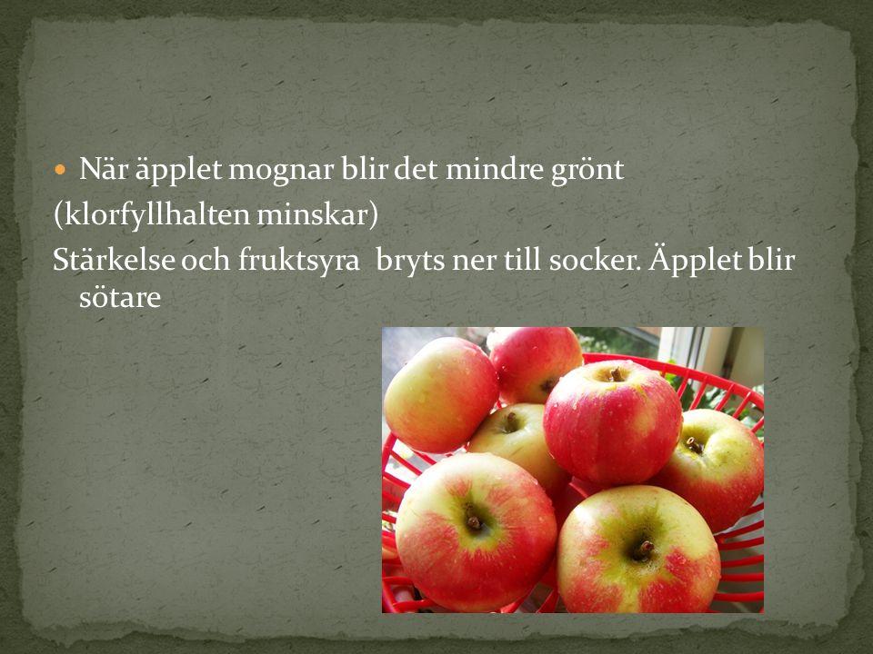 När äpplet mognar blir det mindre grönt (klorfyllhalten minskar) Stärkelse och fruktsyra bryts ner till socker. Äpplet blir sötare
