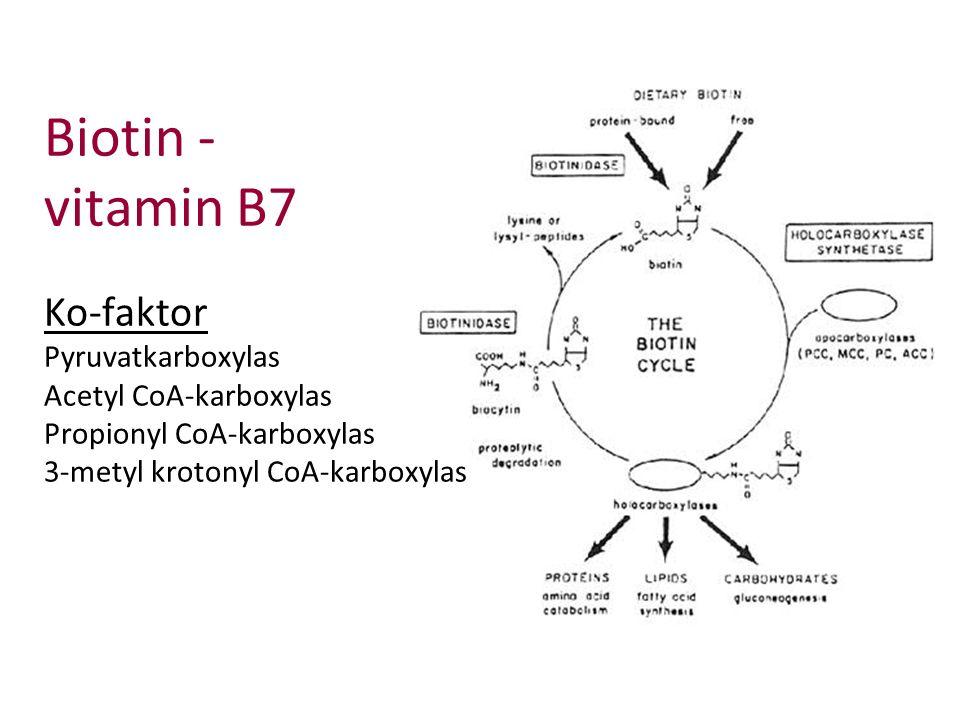 Biotin - vitamin B7 Ko-faktor Pyruvatkarboxylas Acetyl CoA-karboxylas Propionyl CoA-karboxylas 3-metyl krotonyl CoA-karboxylas