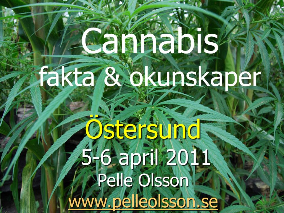 Cannabis fakta & okunskaper Östersund 5-6 april 2011 5-6 april 2011 Pelle Olsson www.pelleolsson.se