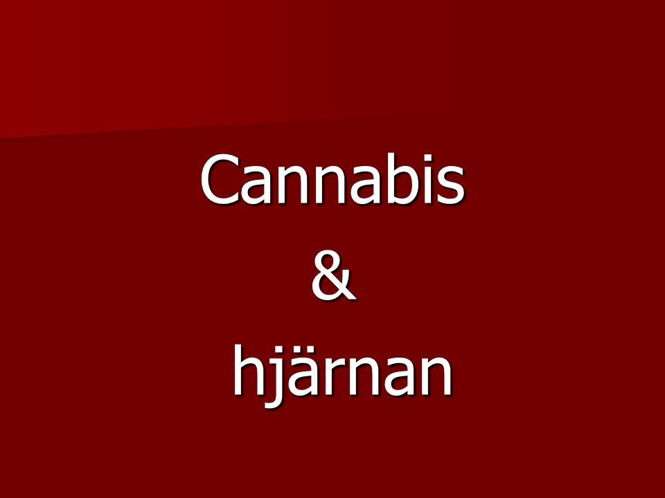 Cannabis& hjärnan hjärnan
