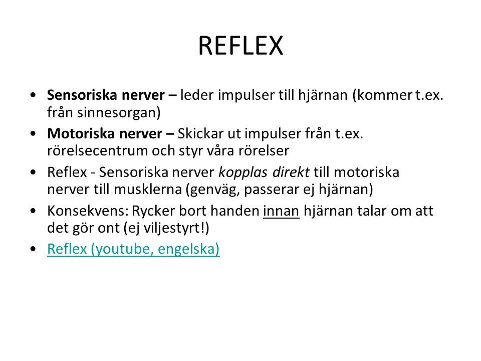 REFLEX Sensoriska nerver – leder impulser till hjärnan (kommer t.ex.