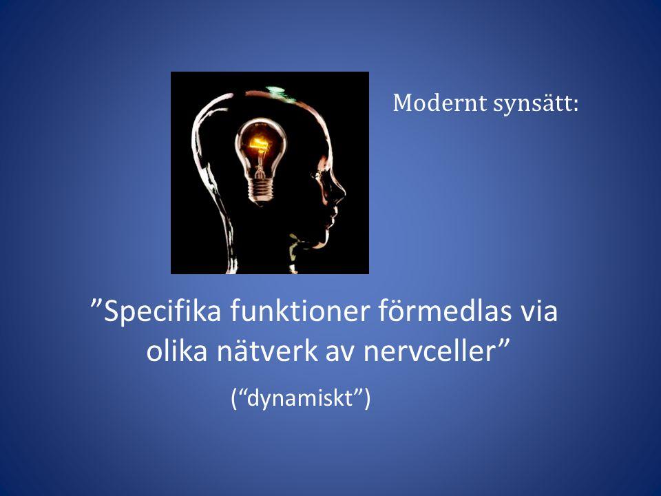 """""""Specifika funktioner förmedlas via olika nätverk av nervceller"""" Modernt synsätt: (""""dynamiskt"""")"""