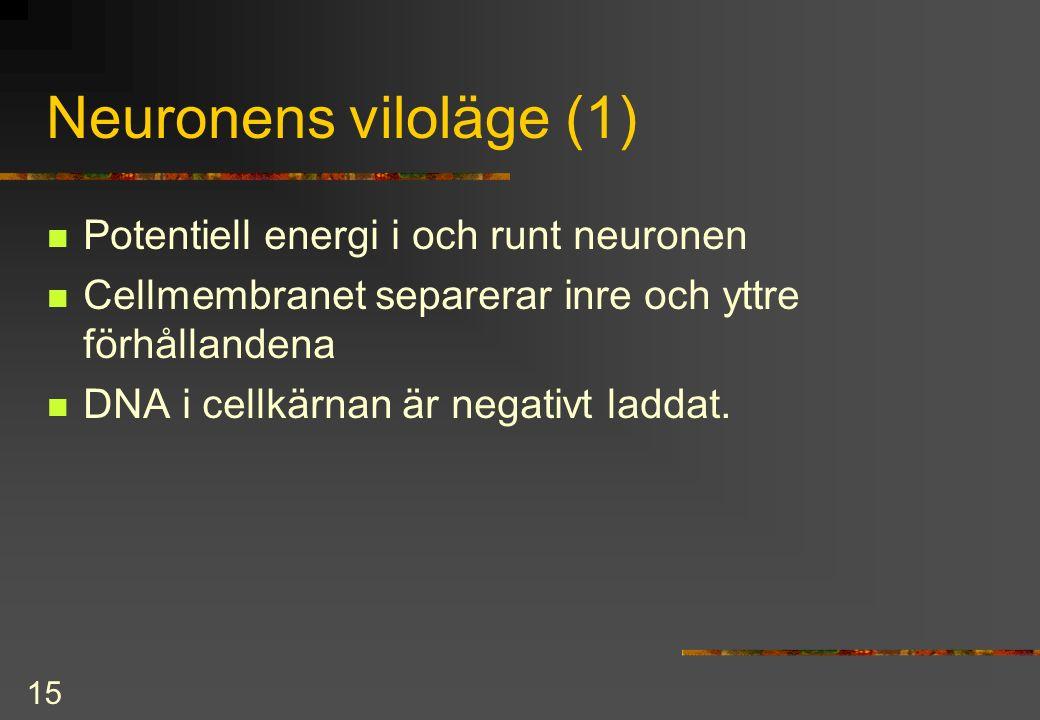 15 Neuronens viloläge (1) Potentiell energi i och runt neuronen Cellmembranet separerar inre och yttre förhållandena DNA i cellkärnan är negativt laddat.
