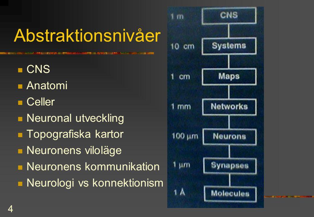4 Abstraktionsnivåer CNS Anatomi Celler Neuronal utveckling Topografiska kartor Neuronens viloläge Neuronens kommunikation Neurologi vs konnektionism