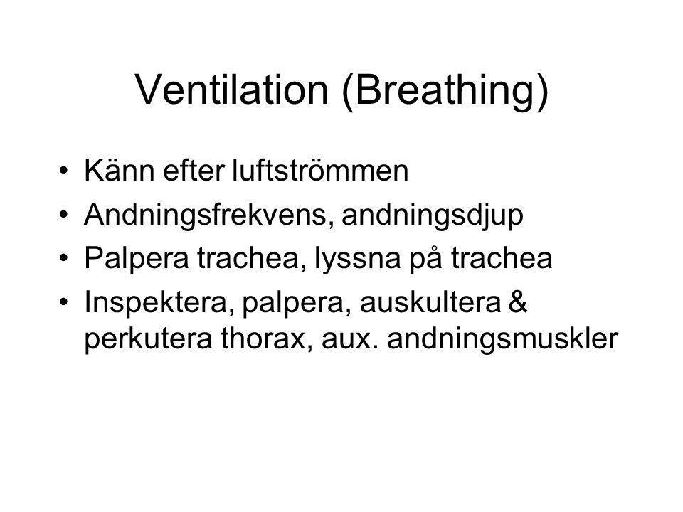 Ventilation (Breathing) Känn efter luftströmmen Andningsfrekvens, andningsdjup Palpera trachea, lyssna på trachea Inspektera, palpera, auskultera & perkutera thorax, aux.