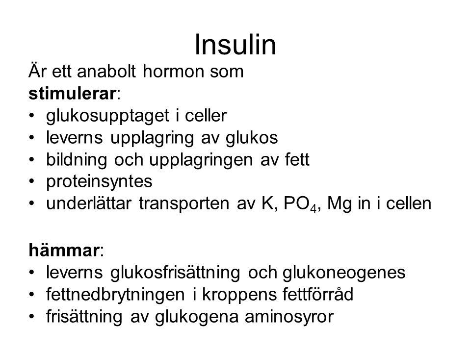 Insulin Är ett anabolt hormon som stimulerar: glukosupptaget i celler leverns upplagring av glukos bildning och upplagringen av fett proteinsyntes underlättar transporten av K, PO 4, Mg in i cellen hämmar: leverns glukosfrisättning och glukoneogenes fettnedbrytningen i kroppens fettförråd frisättning av glukogena aminosyror