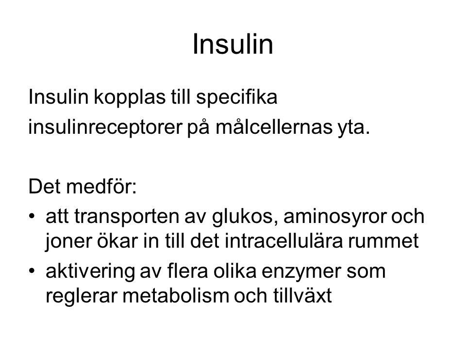Insulin Insulin kopplas till specifika insulinreceptorer på målcellernas yta.