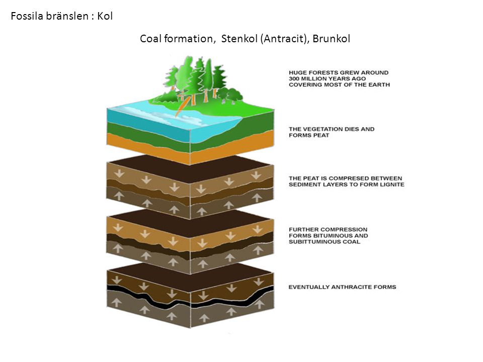 Coal formation, Stenkol (Antracit), Brunkol Fossila bränslen : Kol