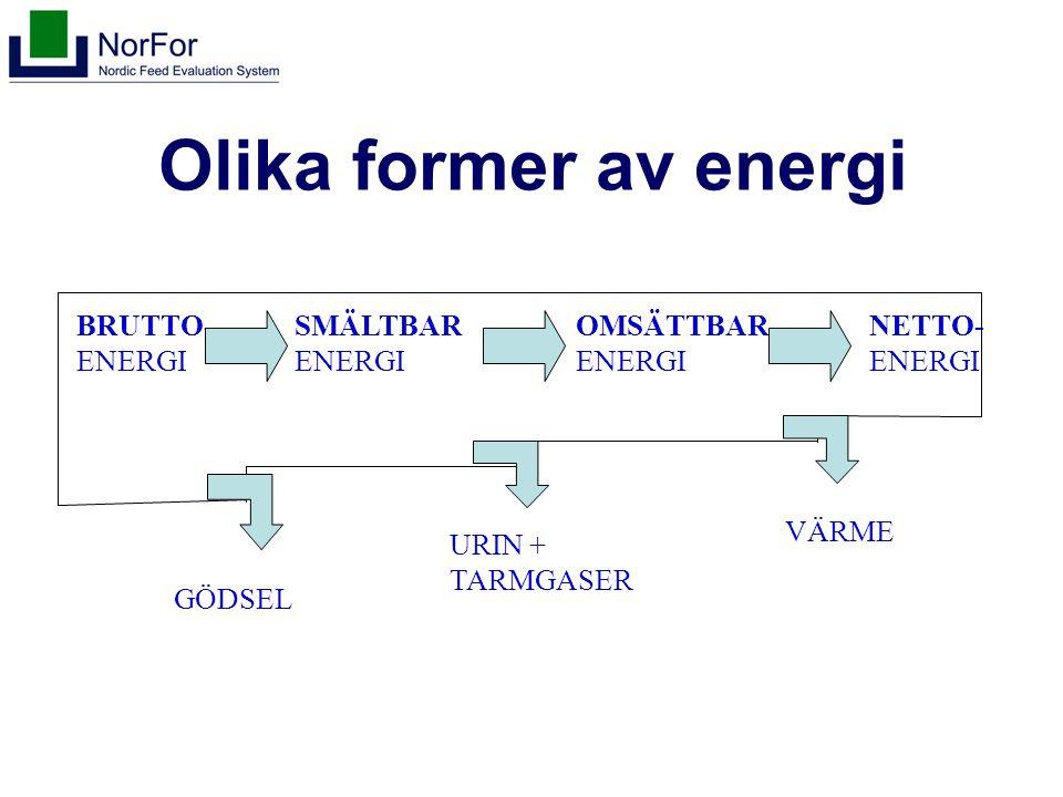 Olika former av energi BRUTTO- ENERGI SMÄLTBAR ENERGI OMSÄTTBAR ENERGI NETTO- ENERGI GÖDSEL URIN + TARMGASER VÄRME