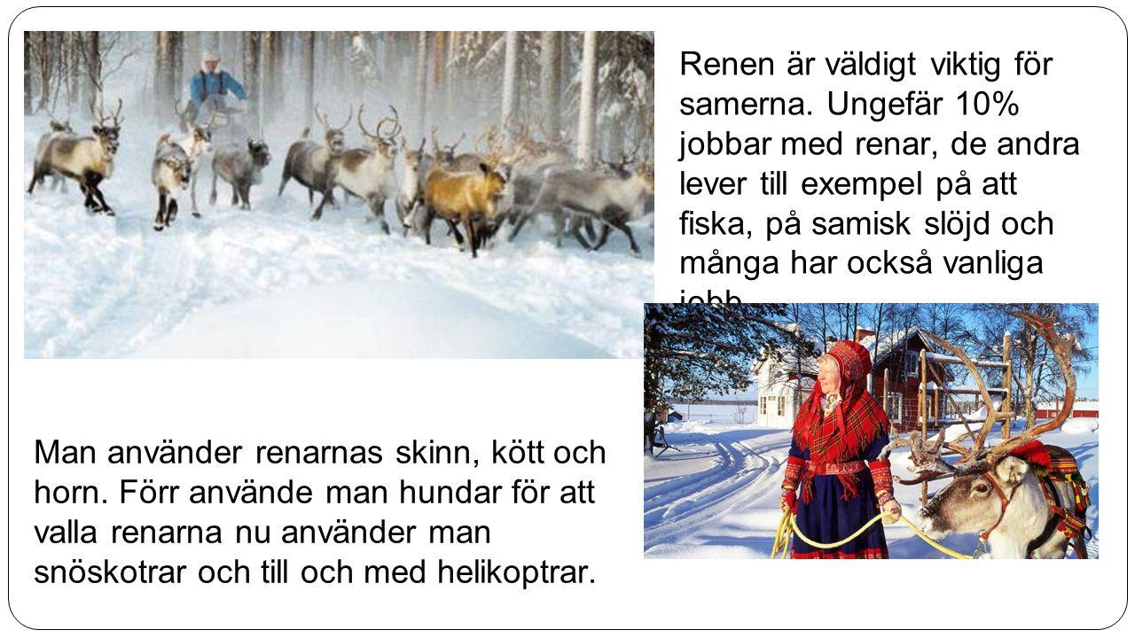 Renen är väldigt viktig för samerna. Ungefär 10% jobbar med renar, de andra lever till exempel på att fiska, på samisk slöjd och många har också vanli