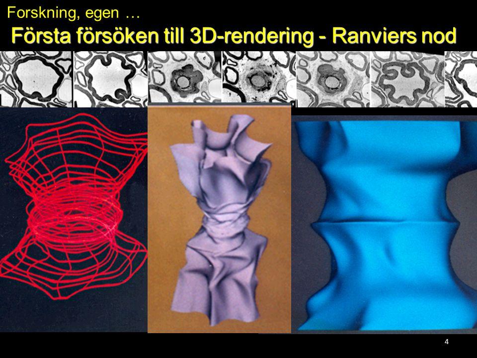 4 Första försöken till 3D-rendering - Ranviers nod Forskning, egen …