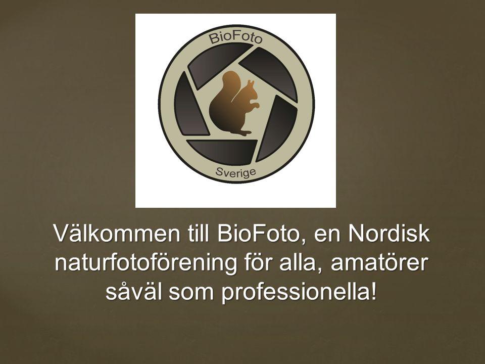 Välkommen till BioFoto, en Nordisk naturfotoförening för alla, amatörer såväl som professionella!