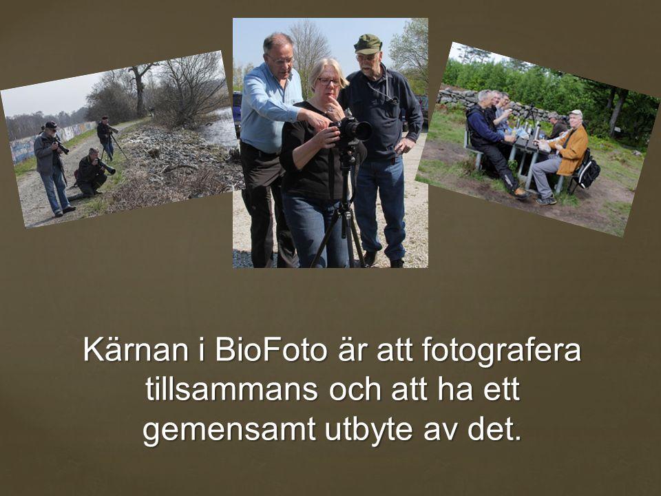 Kärnan i BioFoto är att fotografera tillsammans och att ha ett gemensamt utbyte av det.