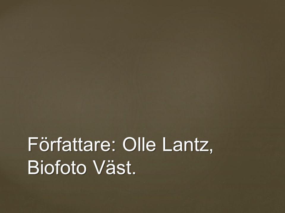 Författare: Olle Lantz, Biofoto Väst.