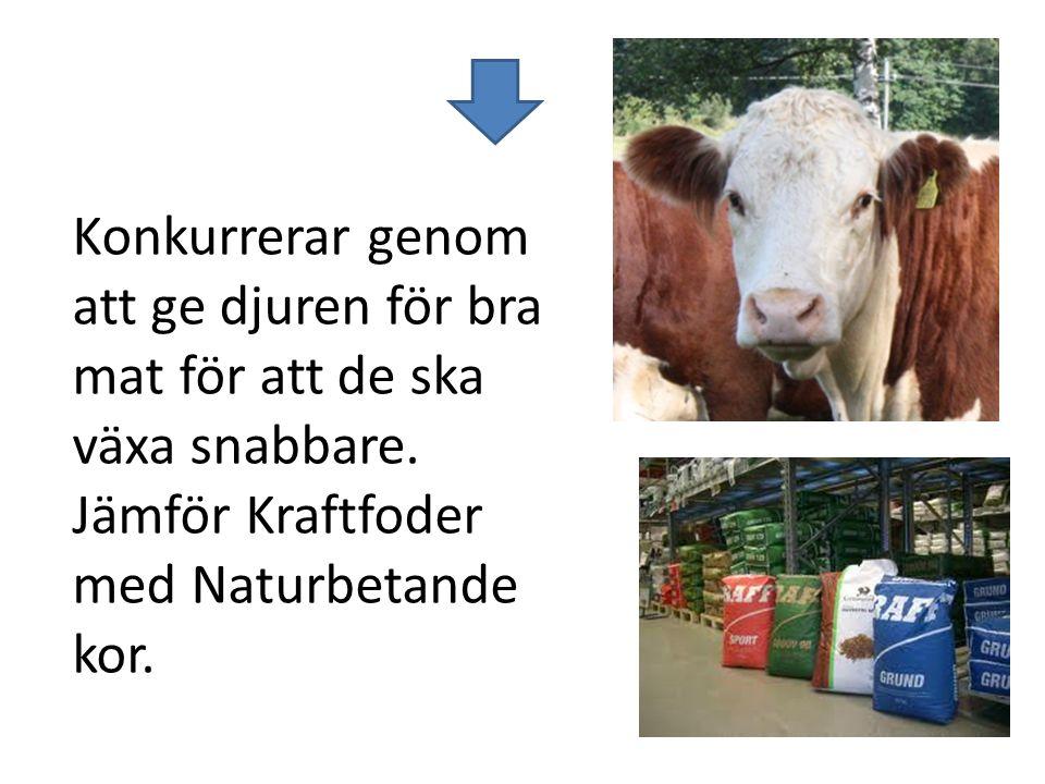Konkurrerar genom att ge djuren för bra mat för att de ska växa snabbare. Jämför Kraftfoder med Naturbetande kor.