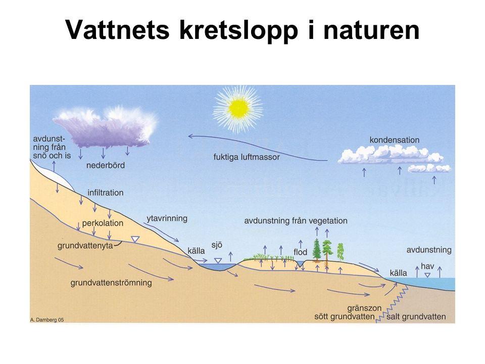 Vattnets kretslopp i naturen