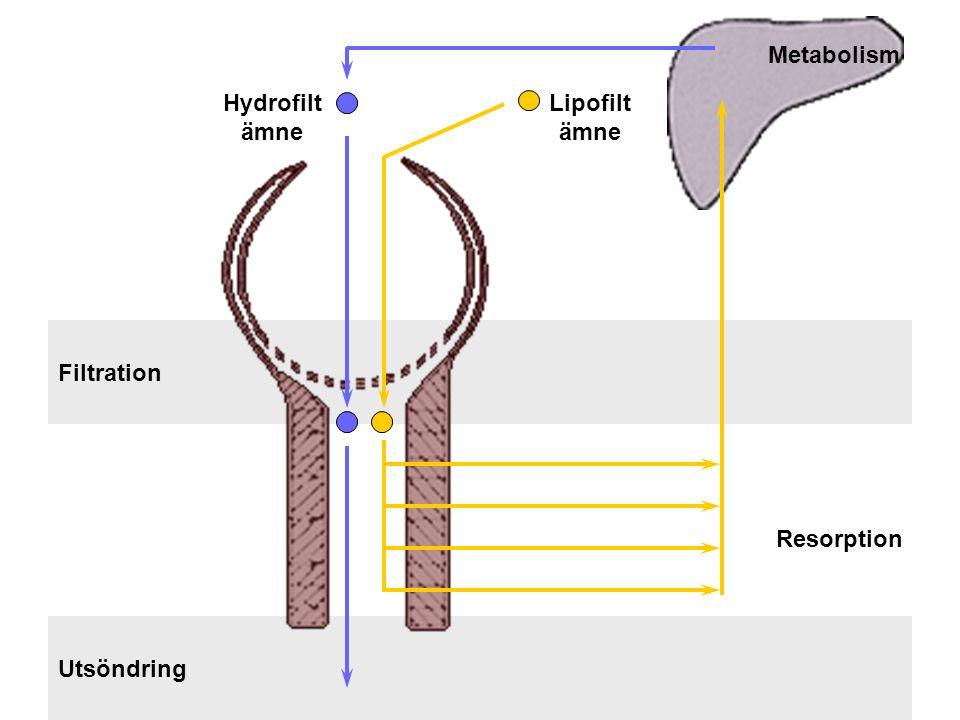 Filtration Utsöndring Resorption Metabolism Hydrofilt ämne Lipofilt ämne