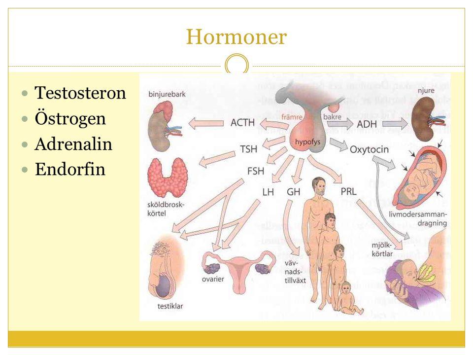 Hormoner Testosteron Östrogen Adrenalin Endorfin