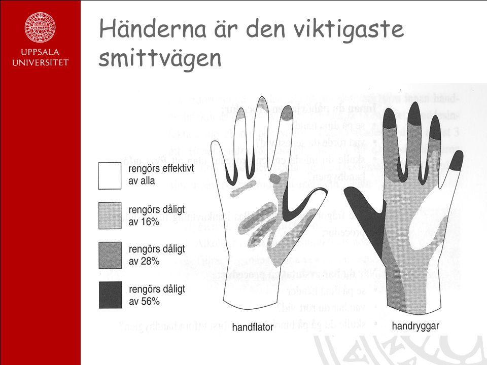 Händerna är den viktigaste smittvägen