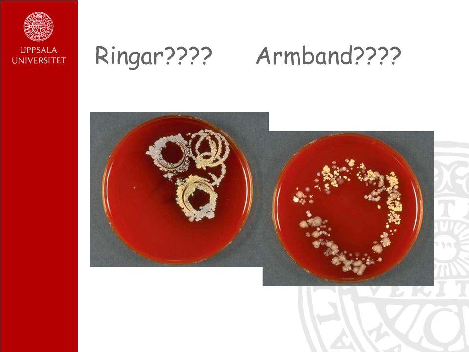 Ringar Armband