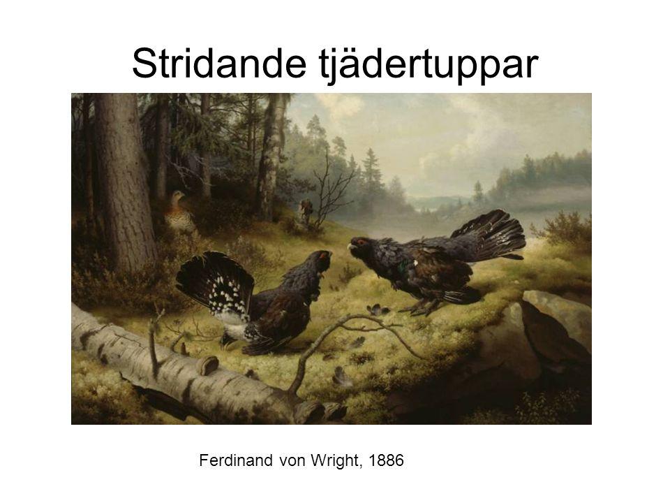 Stridande tjädertuppar Ferdinand von Wright, 1886