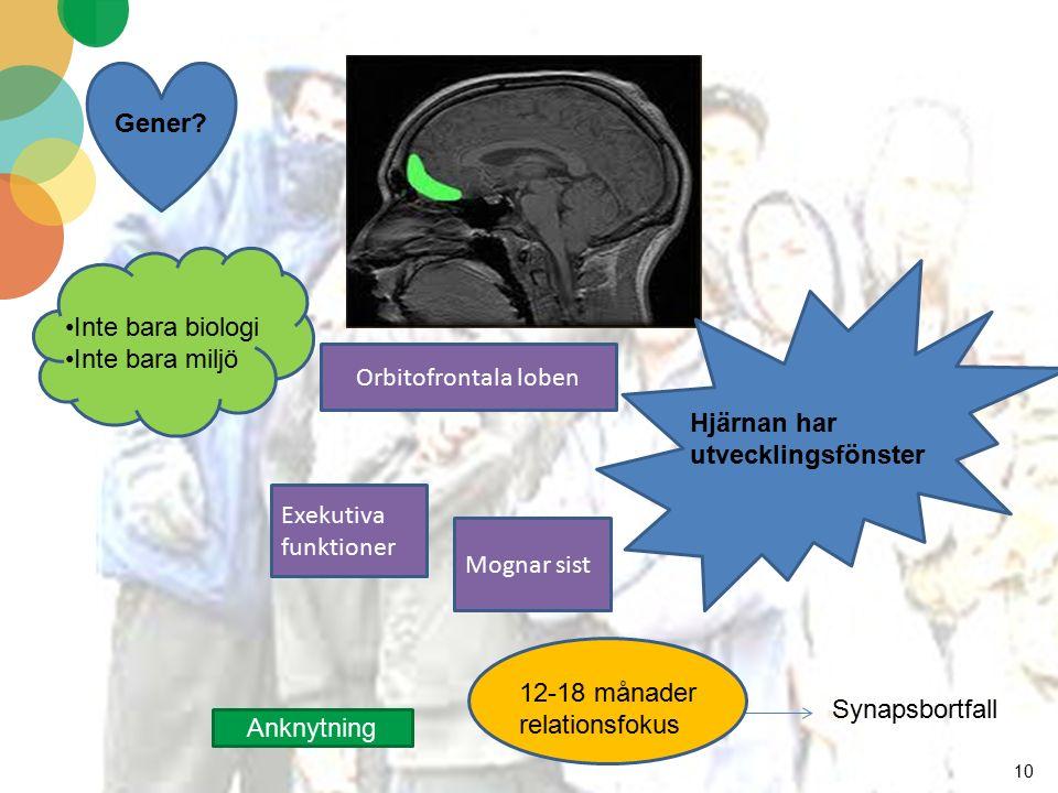 10 Hjärnan har utvecklingsfönster Synapsbortfall Inte bara biologi Inte bara miljö Gener? Orbitofrontala loben Exekutiva funktioner Mognar sist 12-18
