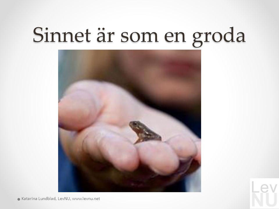 Sinnet är som en groda Katarina Lundblad, LevNU, www.levnu.net