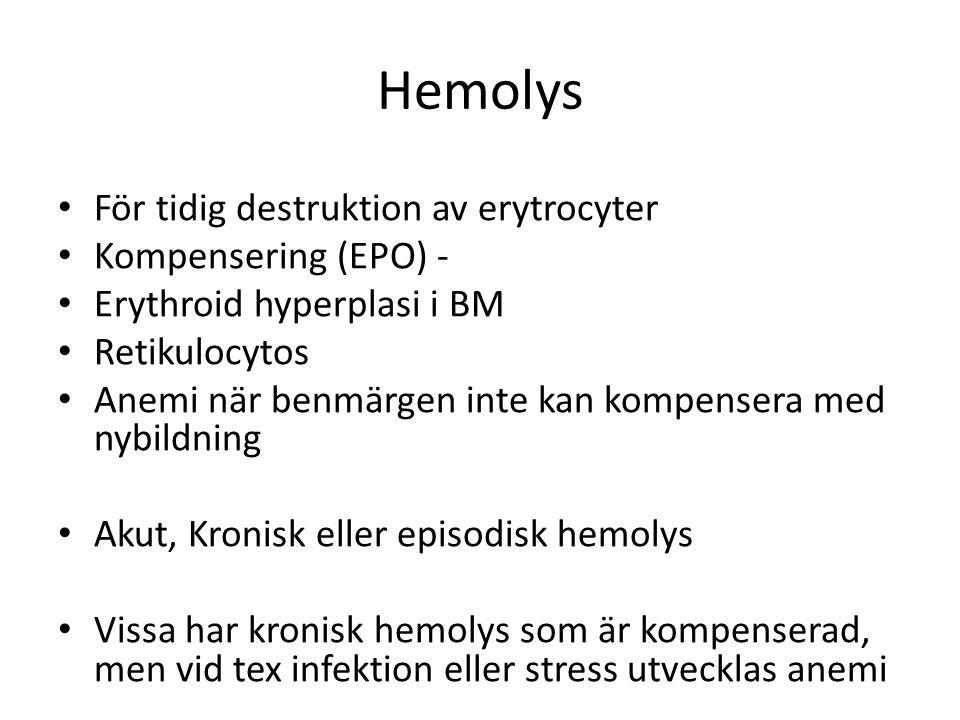 Hemolys För tidig destruktion av erytrocyter Kompensering (EPO) - Erythroid hyperplasi i BM Retikulocytos Anemi när benmärgen inte kan kompensera med nybildning Akut, Kronisk eller episodisk hemolys Vissa har kronisk hemolys som är kompenserad, men vid tex infektion eller stress utvecklas anemi
