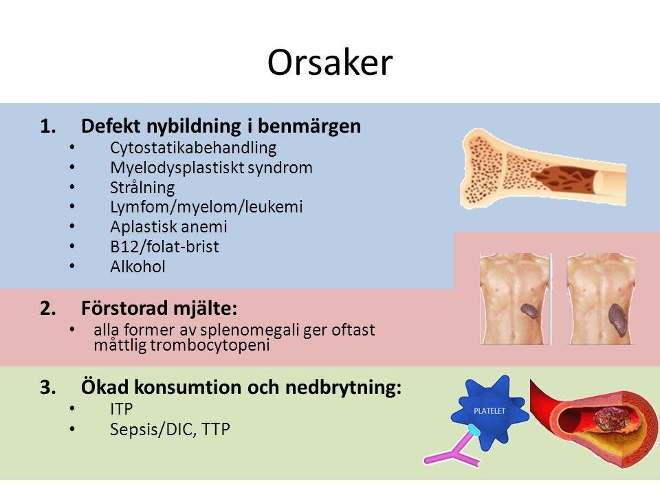 Orsaker 1.Defekt nybildning i benmärgen Cytostatikabehandling Myelodysplastiskt syndrom Strålning Lymfom/myelom/leukemi Aplastisk anemi B12/folat-brist Alkohol 2.Förstorad mjälte: alla former av splenomegali ger oftast måttlig trombocytopeni 3.Ökad konsumtion och nedbrytning: ITP Sepsis/DIC, TTP