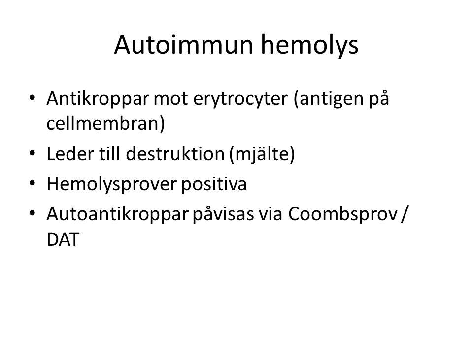 Autoimmun hemolys Antikroppar mot erytrocyter (antigen på cellmembran) Leder till destruktion (mjälte) Hemolysprover positiva Autoantikroppar påvisas via Coombsprov / DAT