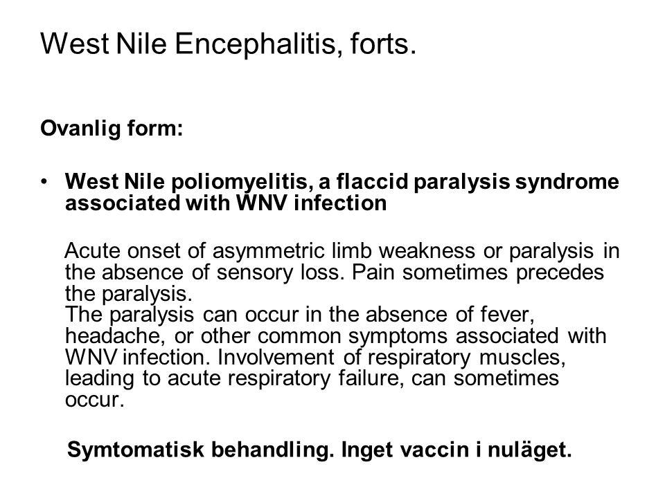 West Nile Encephalitis, forts.