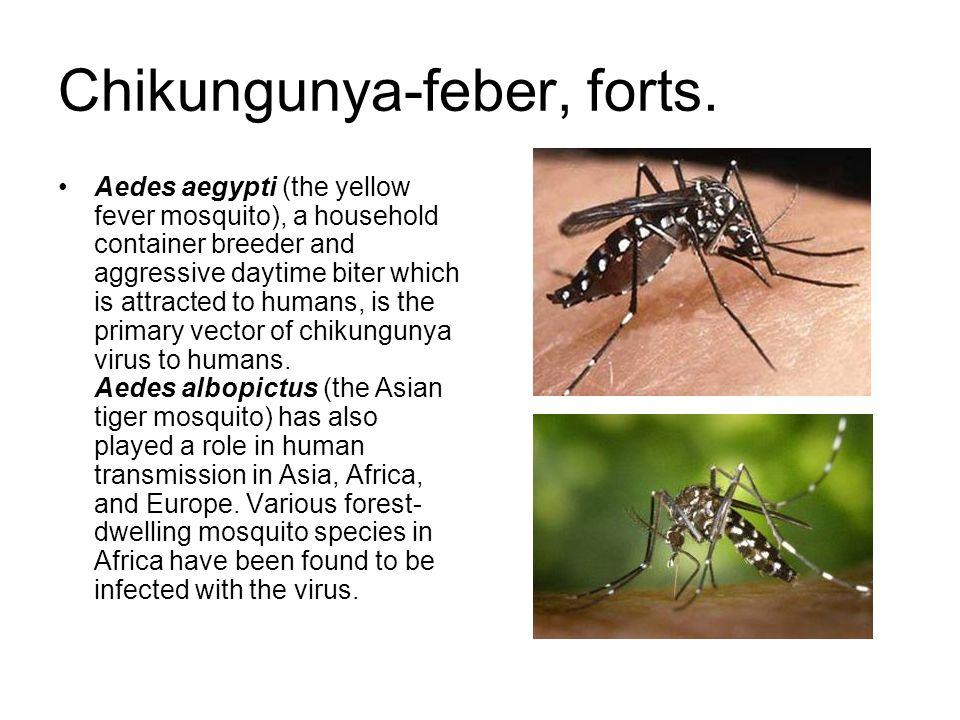 Chikungunya-feber, forts.