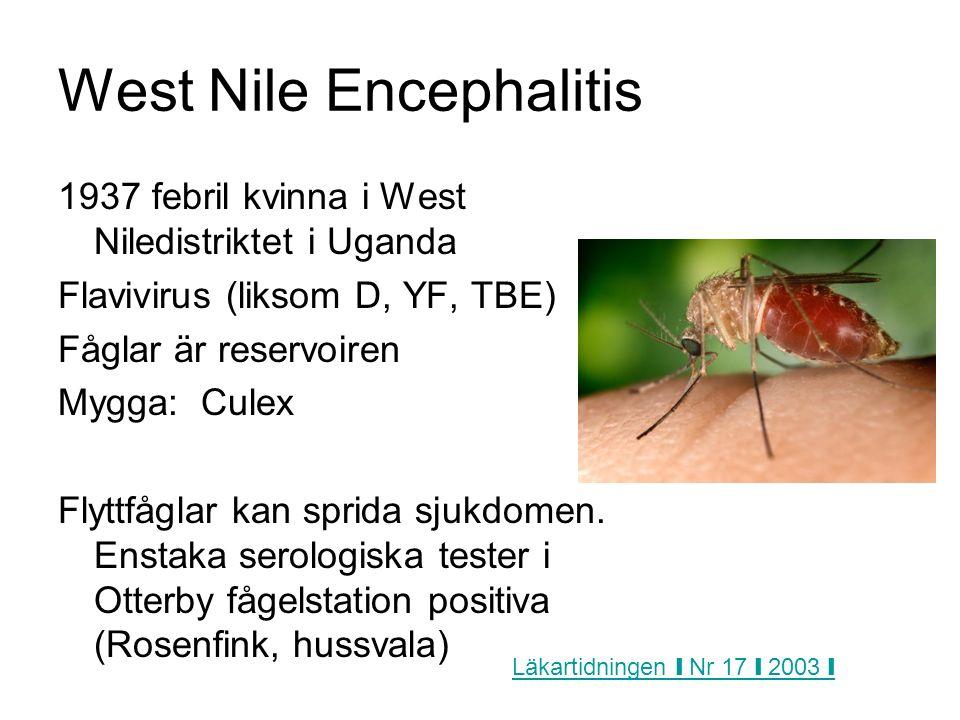 West Nile Encephalitis 1937 febril kvinna i West Niledistriktet i Uganda Flavivirus (liksom D, YF, TBE) Fåglar är reservoiren Mygga: Culex Flyttfåglar kan sprida sjukdomen.