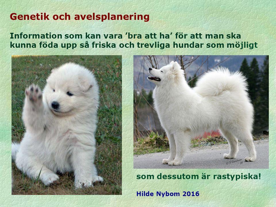 Genetik och avelsplanering Information som kan vara 'bra att ha' för att man ska kunna föda upp så friska och trevliga hundar som möjligt som dessutom