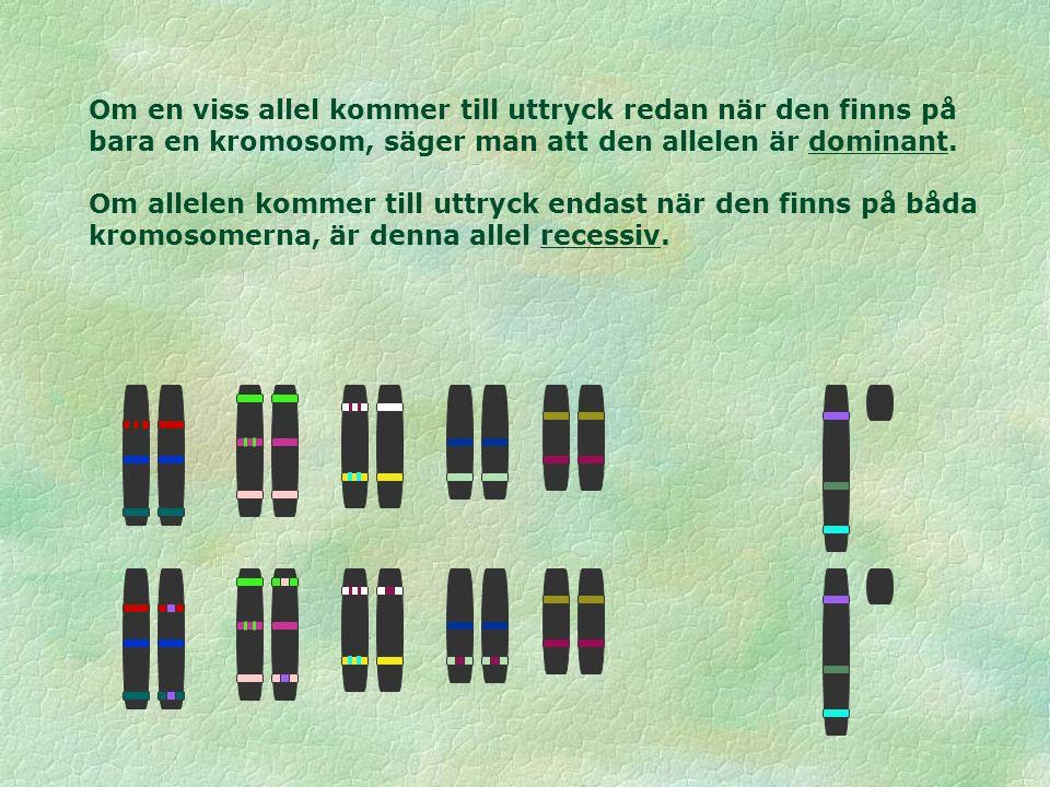 Om en viss allel kommer till uttryck redan när den finns på bara en kromosom, säger man att den allelen är dominant. Om allelen kommer till uttryck en