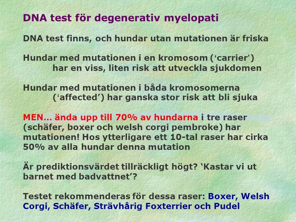 DNA test för degenerativ myelopati DNA test finns, och hundar utan mutationen är friska Hundar med mutationen i en kromosom ('carrier') har en viss, l