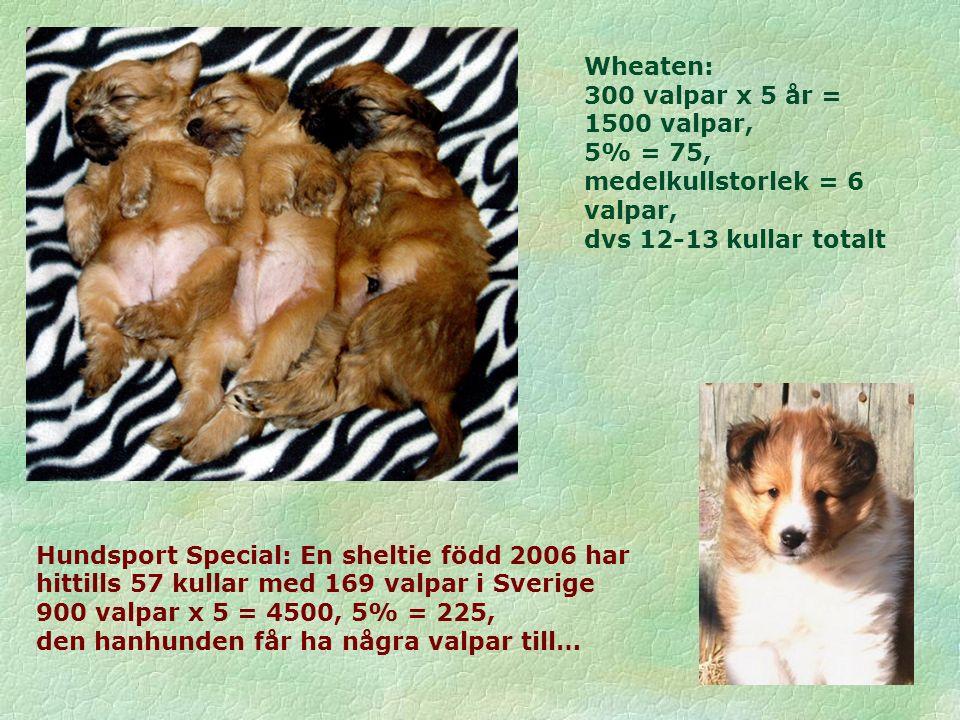 Hundsport Special: En sheltie född 2006 har hittills 57 kullar med 169 valpar i Sverige 900 valpar x 5 = 4500, 5% = 225, den hanhunden får ha några valpar till… Wheaten: 300 valpar x 5 år = 1500 valpar, 5% = 75, medelkullstorlek = 6 valpar, dvs 12-13 kullar totalt