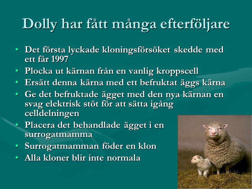 Dolly har fått många efterföljare Det första lyckade kloningsförsöket skedde med ett får 1997Det första lyckade kloningsförsöket skedde med ett får 1997 Plocka ut kärnan från en vanlig kroppscellPlocka ut kärnan från en vanlig kroppscell Ersätt denna kärna med ett befruktat äggs kärnaErsätt denna kärna med ett befruktat äggs kärna Ge det befruktade ägget med den nya kärnan en svag elektrisk stöt för att sätta igång celldelningenGe det befruktade ägget med den nya kärnan en svag elektrisk stöt för att sätta igång celldelningen Placera det behandlade ägget i en surrogatmammaPlacera det behandlade ägget i en surrogatmamma Surrogatmamman föder en klonSurrogatmamman föder en klon Alla kloner blir inte normalaAlla kloner blir inte normala