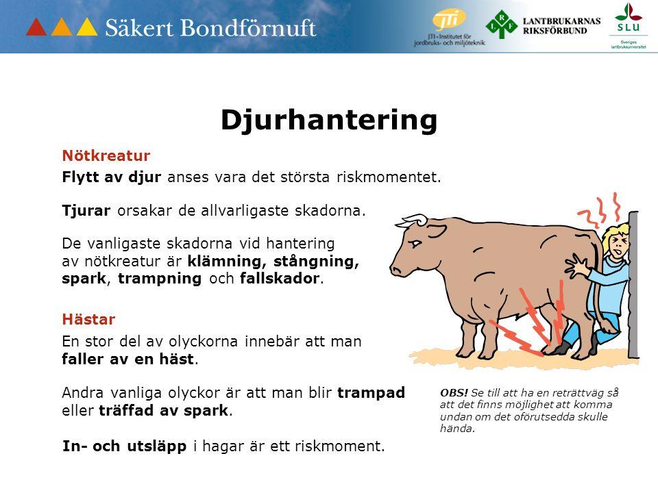 Djurhantering Flytt av djur anses vara det största riskmomentet. OBS! Se till att ha en reträttväg så att det finns möjlighet att komma undan om det o