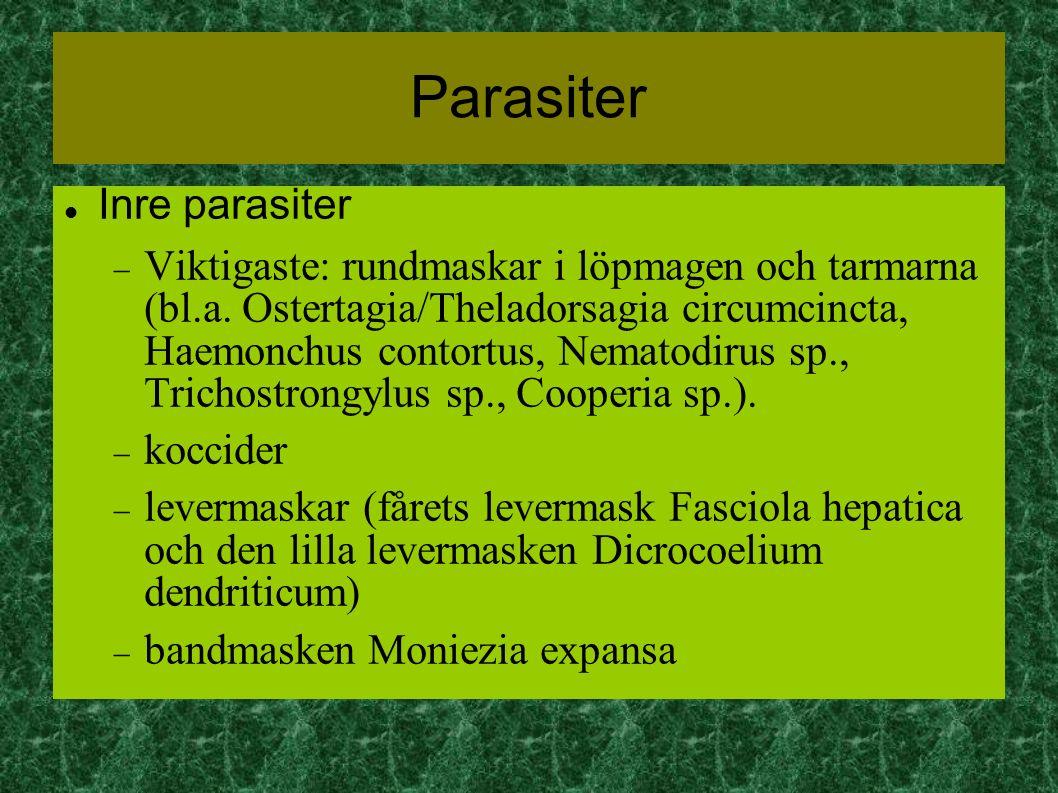 Parasiter Inre parasiter  Viktigaste: rundmaskar i löpmagen och tarmarna (bl.a.