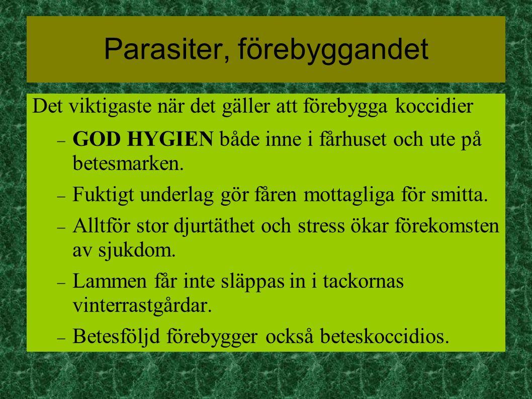 Parasiter, förebyggandet Det viktigaste när det gäller att förebygga koccidier  GOD HYGIEN både inne i fårhuset och ute på betesmarken.